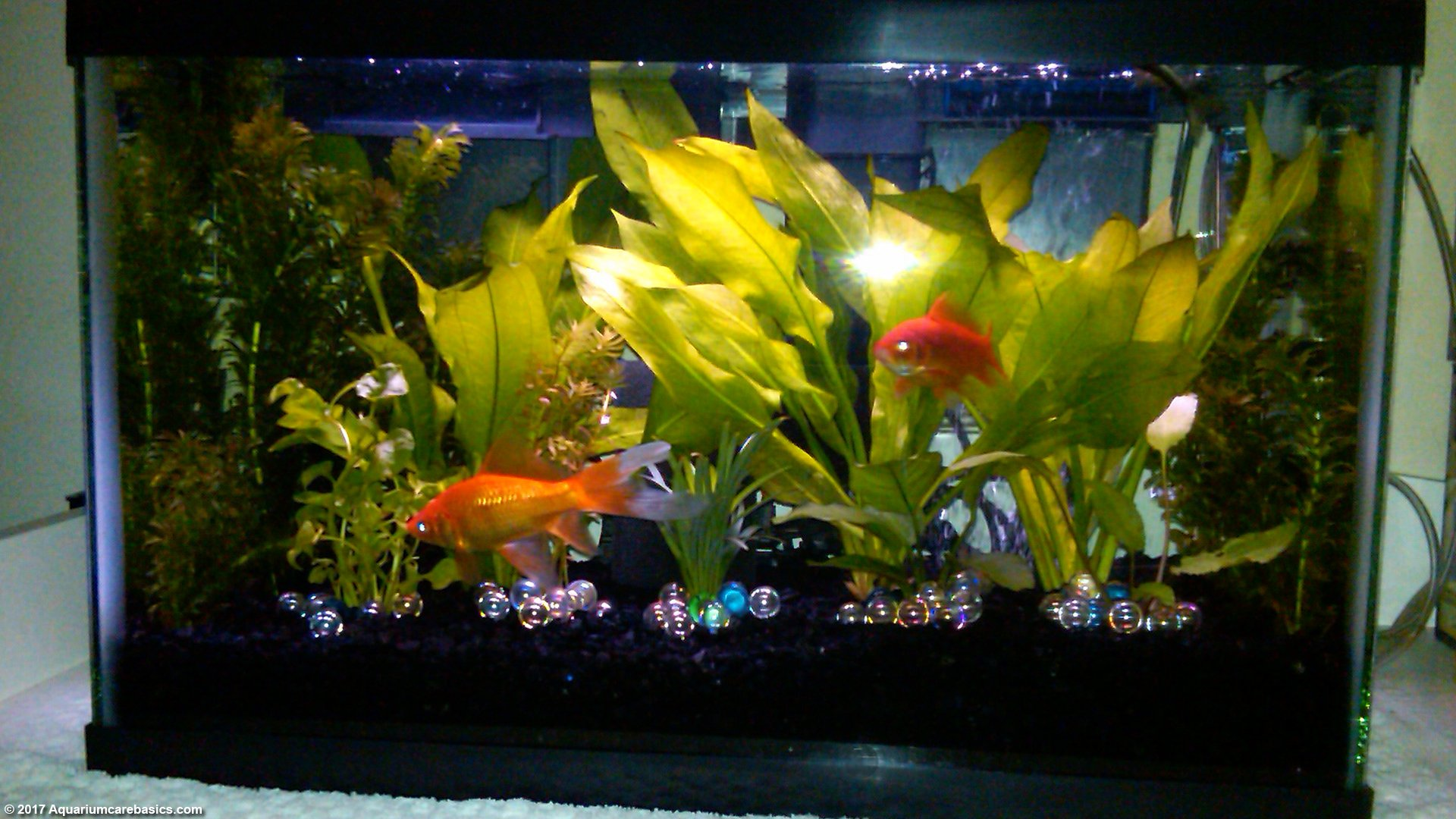 Etonnant 10 Gallon Aquarium Setup Is Not The Best For Goldfish. 10 Gallon Aquarium  Setup Is Not The Best For Goldfish