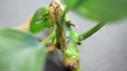 Anubias Plant Stem