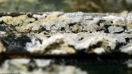 Aquarium Mineral Buildup, Closeup