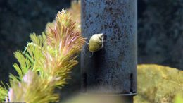 Aquarium Pond Snails Like Hard Surfaces