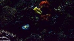 Assassin Snail Eggs On Tank Glass