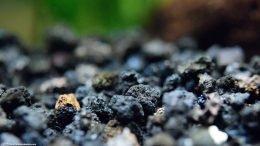 Black Aquarium Substrate, Closeup