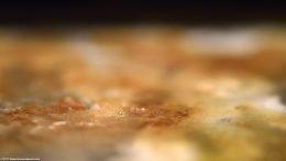 Brown Aquarium Mineral Deposits