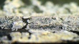 Crusty Mineral Buildup On A Freshwater Aquarium