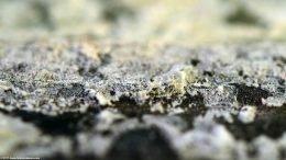 Fish Tank Mineral Deposits