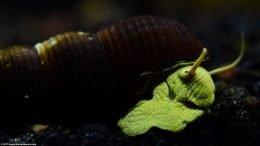 Gold Rabbit Snail Shell Texture