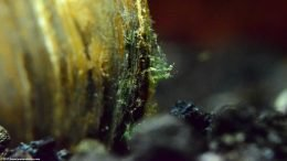 Green Plant Growth On An Asian Gold Clam