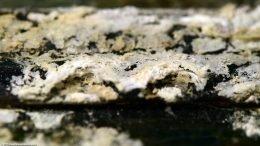 Mineral Buildup On Aquarium Cover
