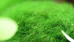 Moss Ball Fibers, Upclose