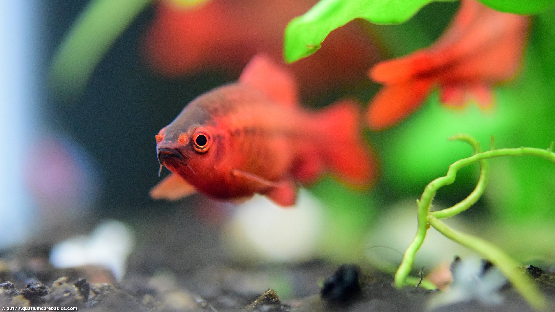 Aquarium Care Basics: 10 Keys To A Healthy Freshwater Fish Tank