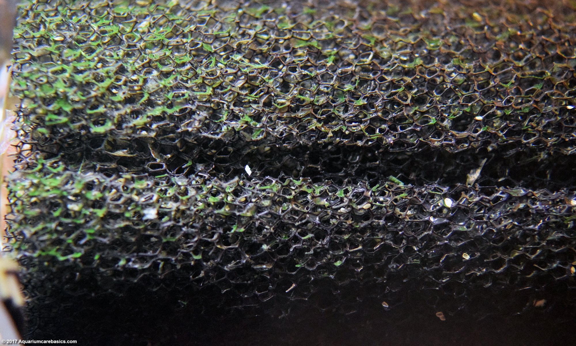 Sponge Filter Closeup, Adds Lots of Surface Area For Nitrifying Bacteria